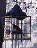 A bird in a bamboo cage wishing it wasn't
